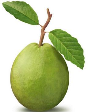 قشر الجوافة لعلاج مرض السكري