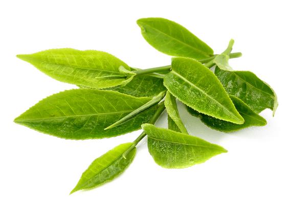 الشاي الأخضر لتنعييم وترطيب اليدين