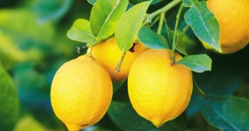 الليمون مزيل قوي لأصعب البقع و الدهون
