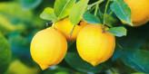 35 استخدام يومي مذهل لليمون- تعرف عليها