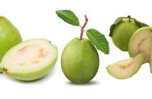 10 فوائد صحية لتناول المرأة الحامل الجوافة