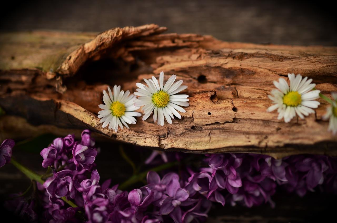 ماء الورد و بودرة خشب الصندل لنضارة البشرة