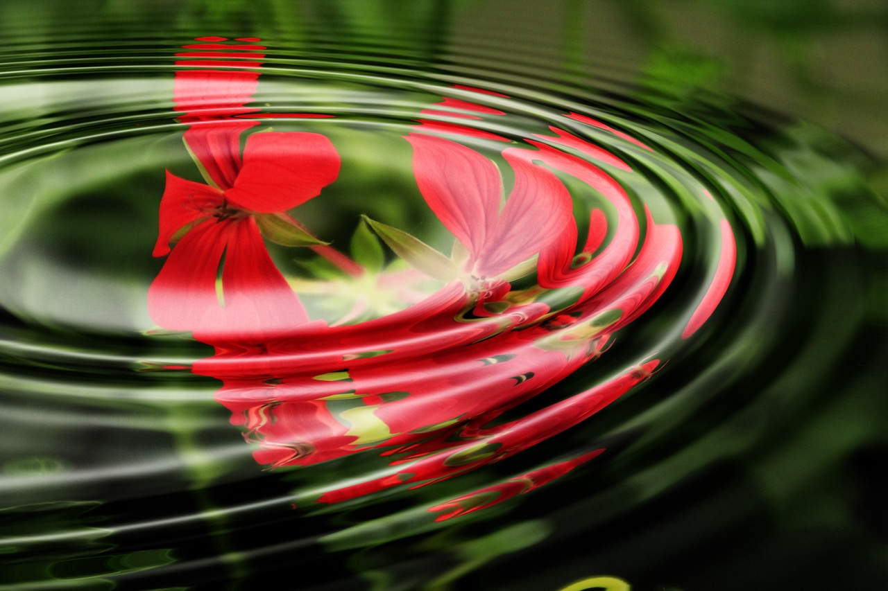 أهم وصفات ماء الورد لترطيب البشرةالجافة و الجلد الجاف